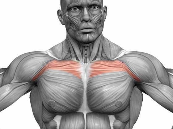 Простые упражнения для прокачки верхней части грудных мышц