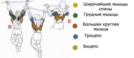 какие мышцы развиваются при подтягивание на турнике